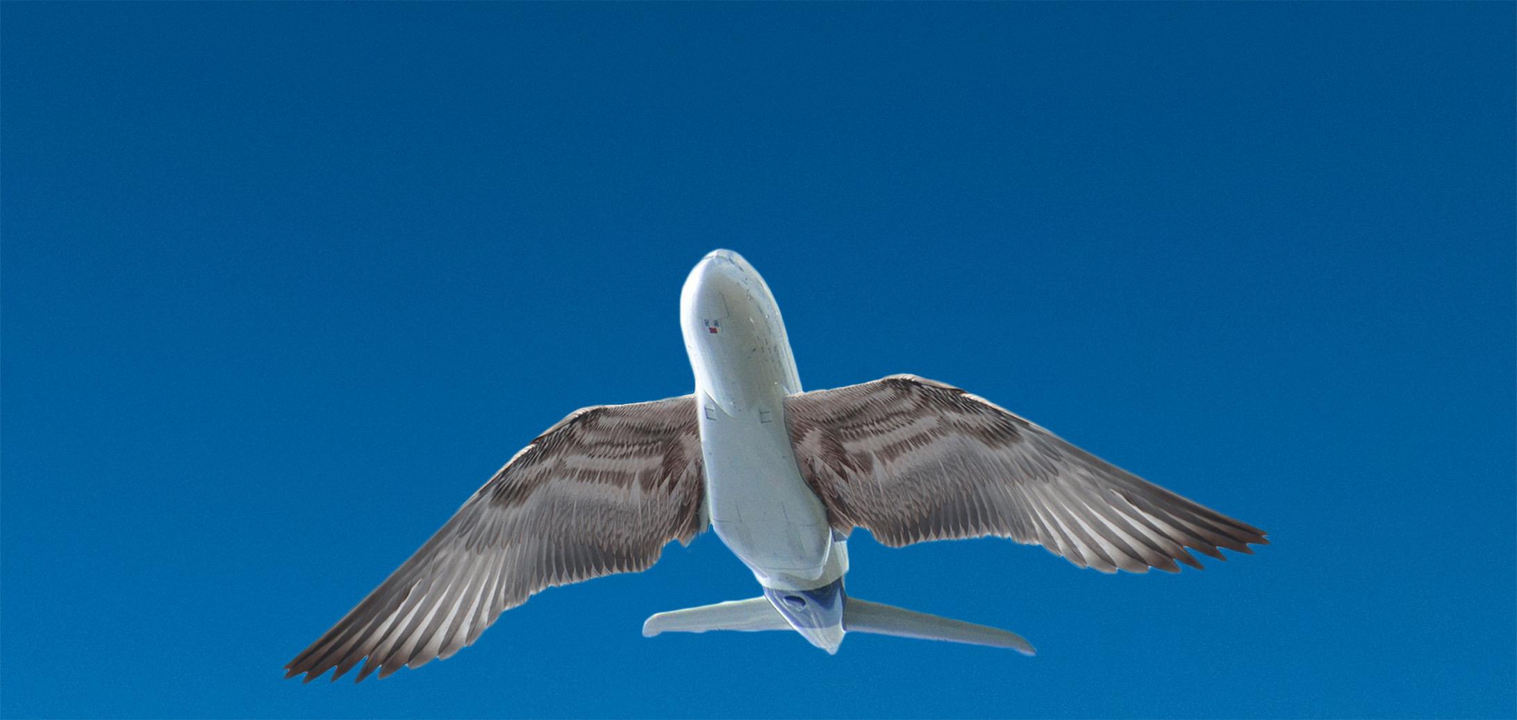 ailes futur avion oiseau