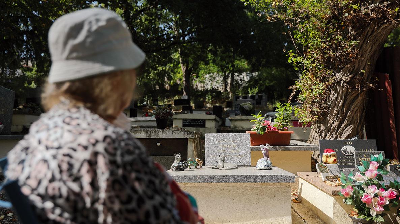 cimetière des animaux