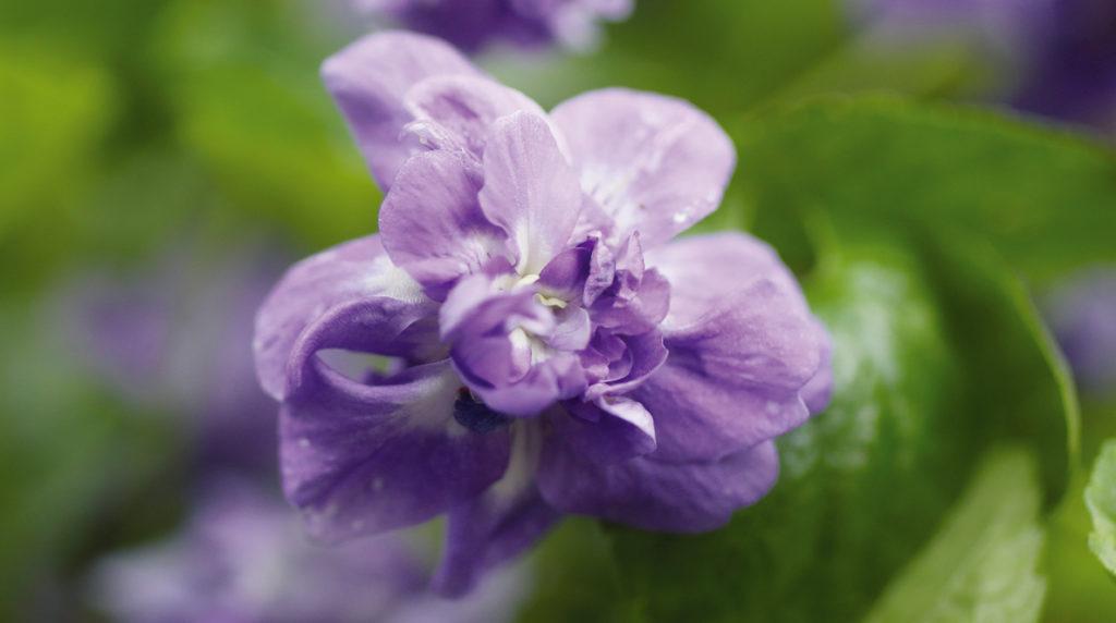 03_boudu_56_violette-toulouse-04